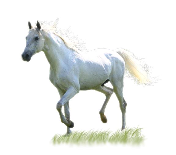 Белый конь Новый год